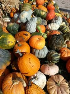 autumn-625379_1920